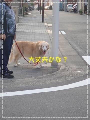 ブログP7150007-s-20180717こぴ.JPG