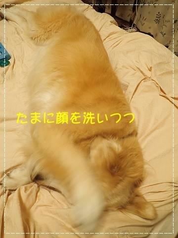 ブログP7160114-s-20180719こぴ.JPG