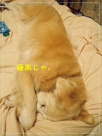 ブログP7160115-s-20180719こぴ.JPG