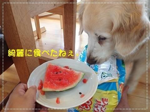 ブログP7190021-s-20180726こぴ.JPG