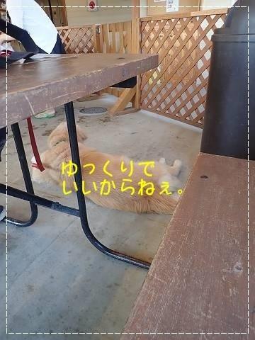 ブログP7220038-s-20180724こぴ.JPG
