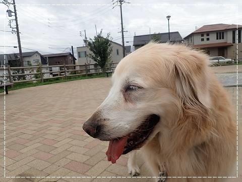 ブログP9080004-s-20180916こぴ.JPG