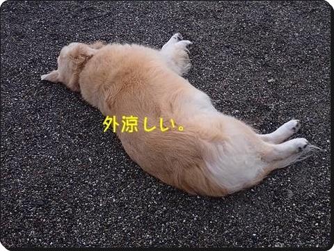 ブログPA070082-s-20181009こぴ.JPG