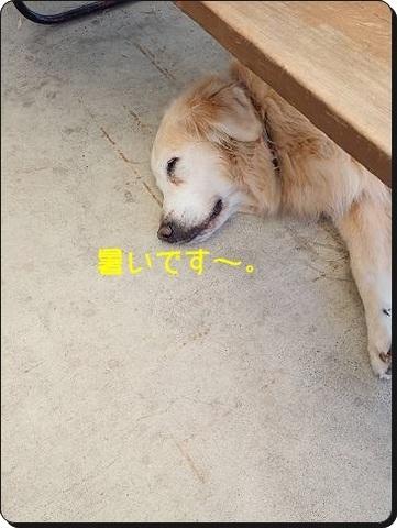 ブログPA070145-s-20181010こぴ.JPG