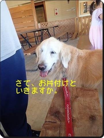 ブログPA080203-s-20181012こぴ.JPG