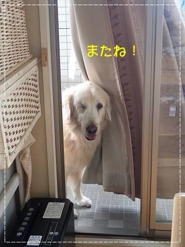 ブログPA120001-s-20181101こぴ.JPG