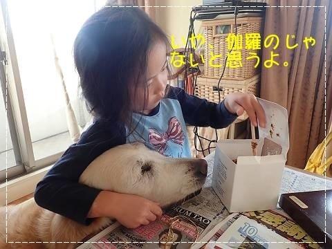 ブログPA200040-s-20181112こぴ.JPG