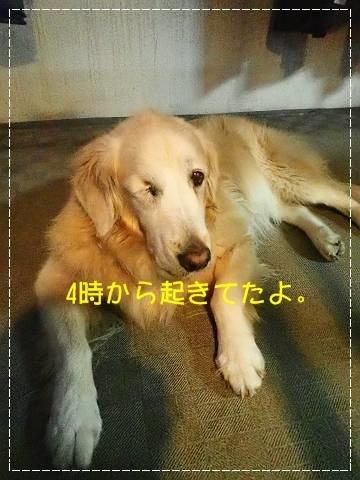 ブログPA250070-s-20181025こぴ.JPG