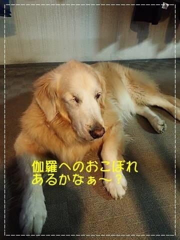 ブログPA250071-s-20181025こぴ.JPG