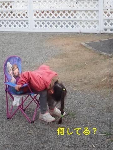 ブログPC010103-s-20181209こぴ.JPG